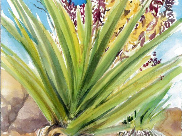 Yucca Los Rios